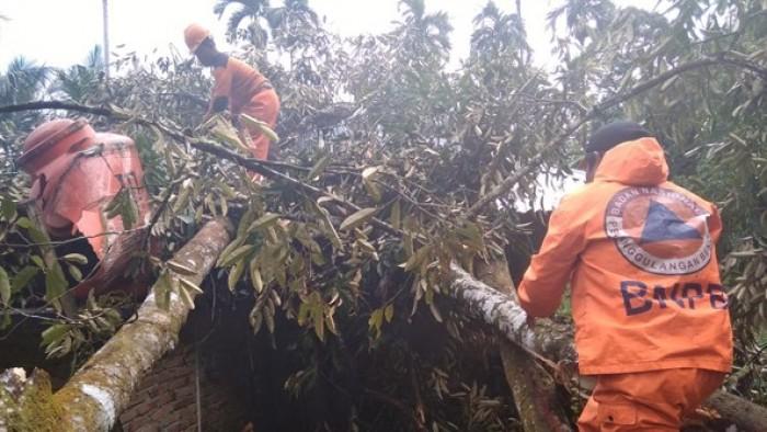 Pohon durian tumbang menimpa rumah warga, Rabu (1/8/2018), sekitar pukul 03.00 WIB.