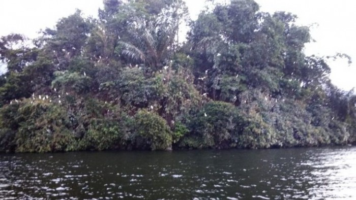 Pulau Bangau